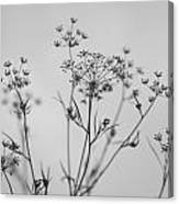 Black And White Floral Silhouettes Canvas Print