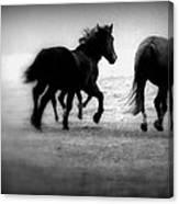 Black And White Horses Canvas Print