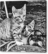 Black And White Kittens Canvas Print