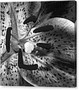 Black And White Lily Up Close Canvas Print