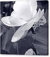 Black And White Lotus Canvas Print