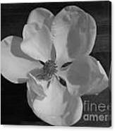 Black And White Magnolia Blossom Canvas Print