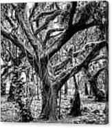 Black And White Maui Tree Canvas Print