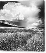 Black And White Meadow Canvas Print