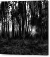 Black And White Monochrome Artistic Painterly Sun Between Trees  Canvas Print