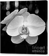 Black And White Orchid With Lights - Square Canvas Print