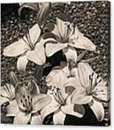 Black And White Orchids Canvas Print