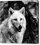 Black And White Painted Wolf Canvas Print