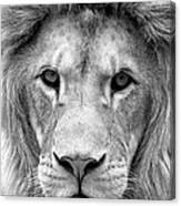 Black And White Portrait Of A Lion Canvas Print