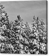 Black And White Snow Covered Trees Canvas Print
