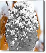 Black And White Snow Leaf Canvas Print