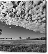 Black And White Wheat Field Canvas Print