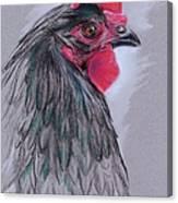Black Australorp Hen Canvas Print