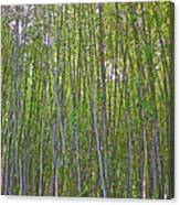 Black Bamboo Heights Canvas Print