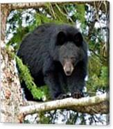 Black Bear 2 Canvas Print