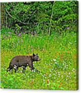 Black Bear Along Yellowhead Highway-bc Canvas Print