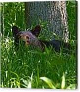 Black Bear Cub Canvas Print