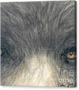 Black Bear Eyes Wildlife Animal Art Canvas Print