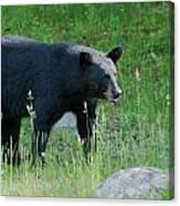 Black Bear Female Canvas Print