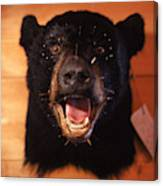 Black Bear Head Canvas Print