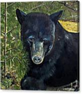 Bear Painting - Scruffy - Profile Cropped Canvas Print