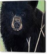 Black Bear Staredown Canvas Print