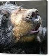Black Bear Up Close Canvas Print