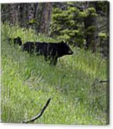 Black Bear With Cub Symetrical On Hillside Canvas Print