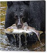Black Bear With Salmon Canvas Print