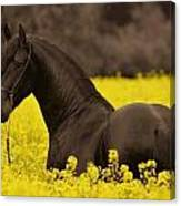 Black Beauty Canvas Print