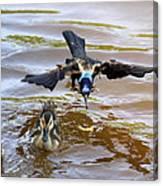 Black Bird On The Water Canvas Print