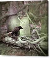 Black Bird In Forgotten Graveyard Canvas Print