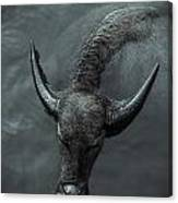 Black Buffalo Canvas Print