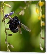 Black Bumblebee Canvas Print