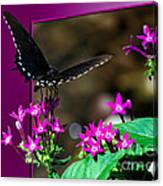 Black Butterfly 06 Canvas Print