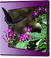 Black Butterfly 07 Canvas Print