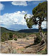 Black Canyon Juniper Canvas Print