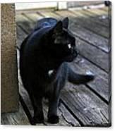 Black Cat On Porch Canvas Print