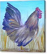 Black Copper Maran Rooster Canvas Print