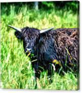 Black Cow Canvas Print