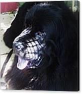 Black Dog Canvas Print