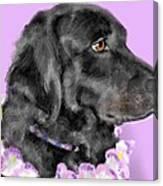 Black Dog Pretty In Lavender Canvas Print