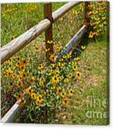 Black Eyed Susans In A Wildflower Meadow Canvas Print