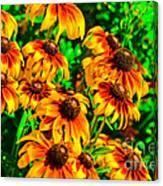Black Eyed Susans Canvas Print