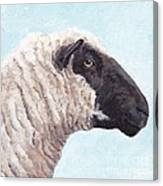 Black Face Sheep Canvas Print