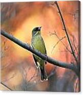 Black-faced Bunting Canvas Print