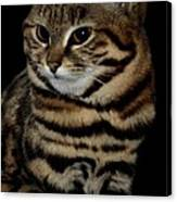 Black-footed Cat Canvas Print