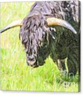 Black Highland Cattle Bull Canvas Print