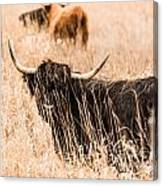 Black Highland Cow Canvas Print