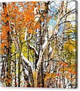 Black Hills Entanglement Canvas Print